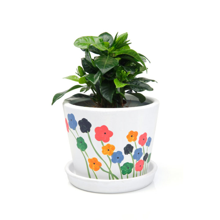 Pretty Flower Plant Harry S Used Furniture
